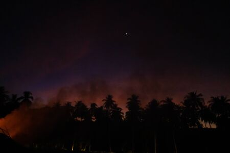 Smoke from a bonfire in a rainforest at sunset. Fires in the forest. Smoke on the background of palm trees at sunset.