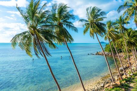 The shore of a tropical island. Beach by the ocean. Palm trees overhang a water.