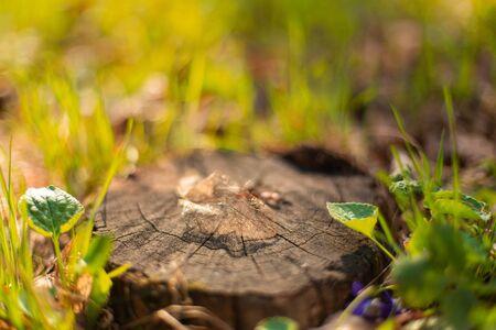 Dry skeletonized leaf on a stump close up.
