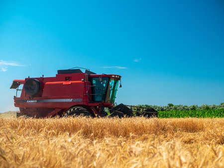 Wheat harvesting in the summer. Red harvester working in the field. Golden ripe wheat harvest agricultural machine harvester on the field Redakční