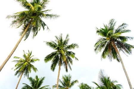 palm grove. Palm trees in the tropical jungle. Symbol of the tropics and warmth.