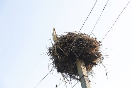 A nest with storks on a pole of a power line in a village