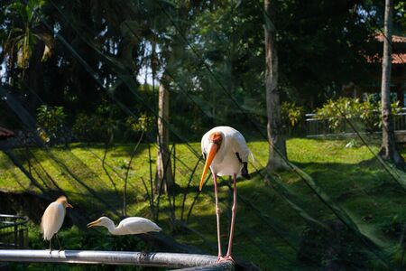 Portrait of milk stork on a fence. Banco de Imagens