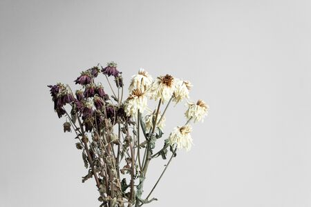 Bouquet of wilted flowers on a white background.
