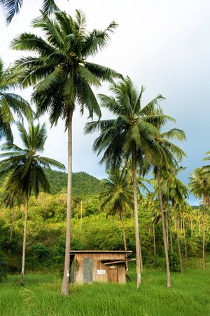A hut between palm trees in the jungle. Фото со стока