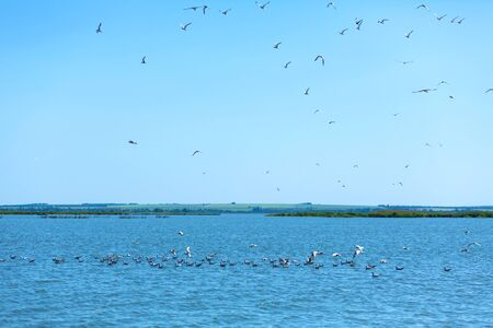 A flock of seagulls hunt fish in the river. Stock fotó