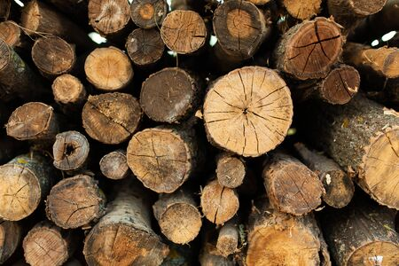 A pile of dry sawn trees. Firewood for the furnace or fireplace Banque d'images