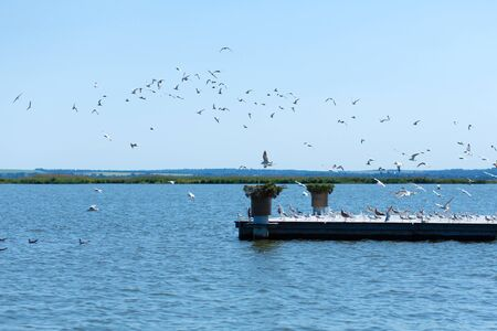Pier on the river bank. A large flock of seagulls. Summer day