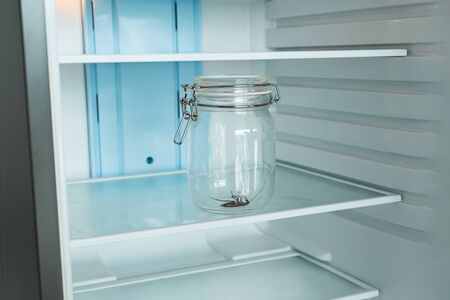 Cockroach in a glass jar in an empty refrigerator. Poverty and lack of food concept.