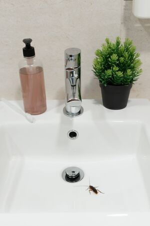 Cockroach in the bathroom on the sink. The problem with insects