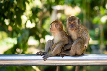 Two little monkeys hug while sitting on a fence. Foto de archivo