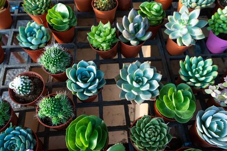Small decorative flower pots with succulents. View from above. Decor with fresh flowers. 免版税图像