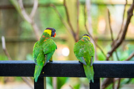 Rainbow Lorikeet parrots in a green park. Bird park, wildlife.