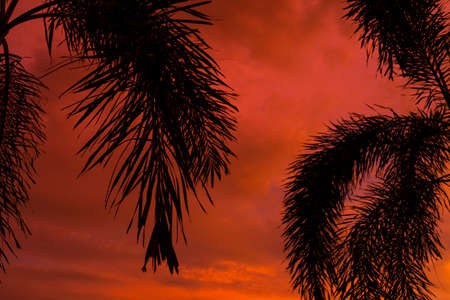 Silhouetted by a palm tree on the background of an unusual fiery red tropical sunset
