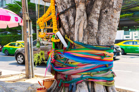 Tree tied with a ribbon. Sacred Trees and Rites in Asia. Reklamní fotografie
