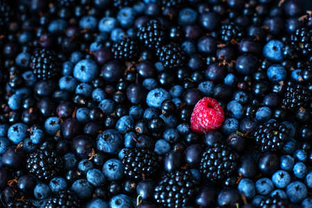 Uniqueness concept. Not like the others. Red raspberry in a heap mix of black berries of mulberry currant and blueberry. Stock Photo