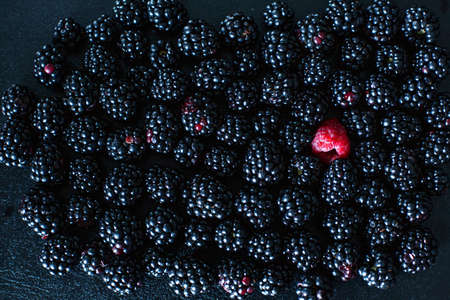 The concept of uniqueness. Not like the others. Red raspberry in a heap of black mulberries.