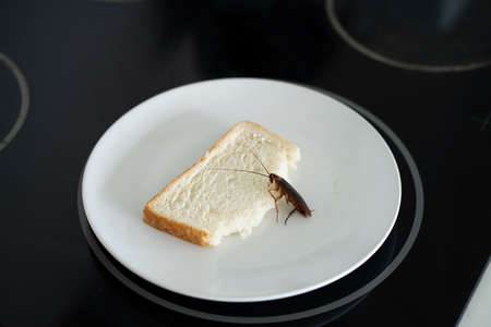 A cockroach is sitting on a piece of bread in a plate in the kitchen. Cockroaches eat my food supplies.
