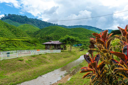 Landscape of hills with green tea fields and mountain river. Pure green nature