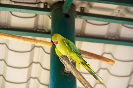 Tropical green parrot with a red beak