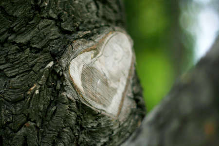 The cut branch from the tree was healed in the shape of a heart. Don't kill nature concept.