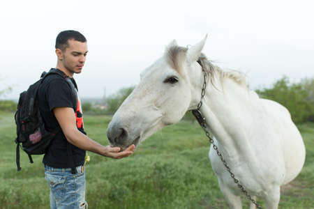 Guy with a horse in a green field. Communication with animals.
