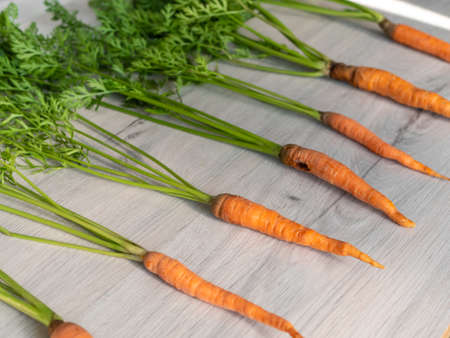 Fresh carrots only from the garden. Orange carrots with a green stem on a light background. Appetizing healthy vegetable.