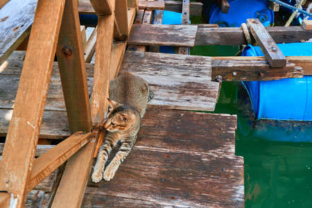 The cat lies on the wooden pier of the fishing village, waiting for food.