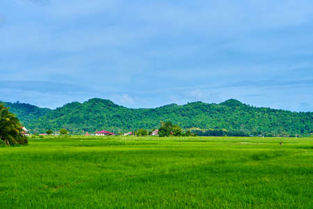 Impressive landscape green rice field with mountains in the background.