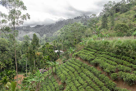 Wonderful natural landscape. Green hilly valley.