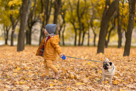 A child walks with a pug in the autumn park. Friends since childhood.