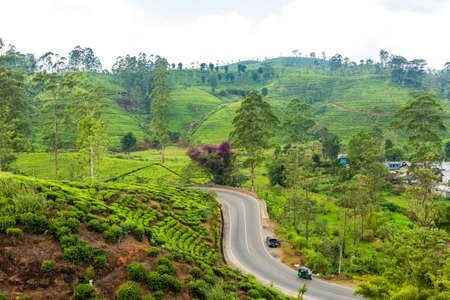 scenery road through green hills and tea plantations. Sri Lanka natural landscape. Standard-Bild