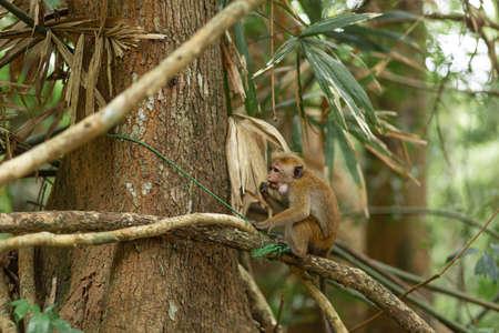 Monkey in the jungle. Natural habitat close up. Standard-Bild