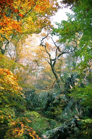 at ease: Beautiful forest with countless numbers colours Stock Photo