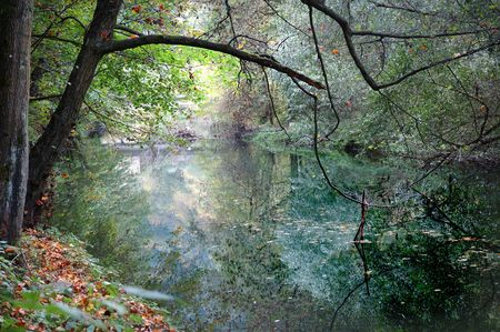 natur: Beatiful autumn and natur on the river mirrors ...
