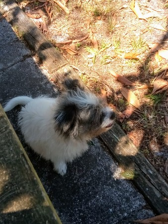 Dog in shade 写真素材