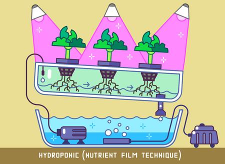 Plants Growing with Hydroponic Nutrient Film Technique Under Phytolamps Foto de archivo - 103667191