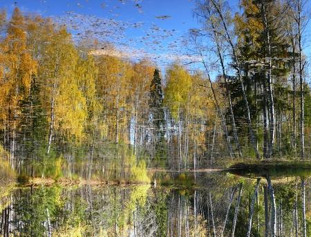reflexion: Reflexion