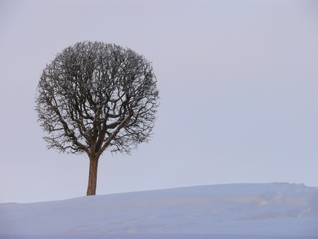 A lonely tree photo