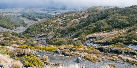 treed: Hill country, Mt Ruapehu, North Island, New Zealand Stock Photo