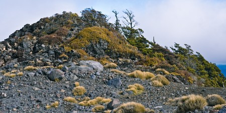 treed: Hill covered with rocks and underwood, Mt Ruapehu, North Island, New Zealand Stock Photo