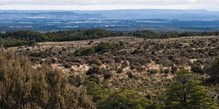 treed: Mt Ruapehu downland, New Zealand