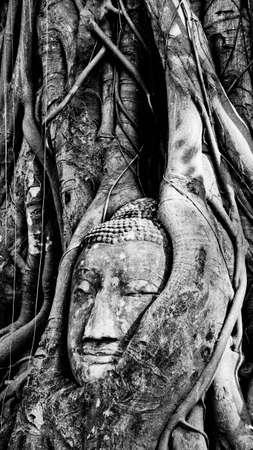 banyan: Cabeza de Buda en Banyan Tree Foto de archivo