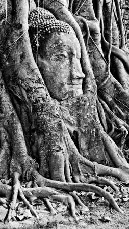 banyan: Buddha Head in Banyan Tree