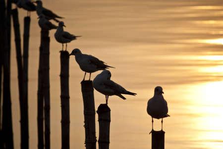 Seagull on the pole photo