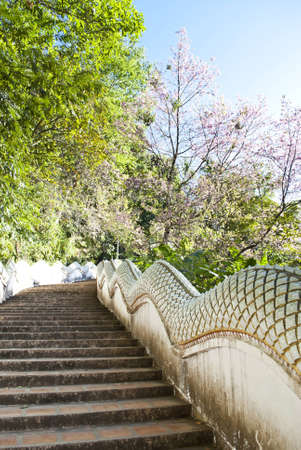 snakes and ladders: Pathway to temple