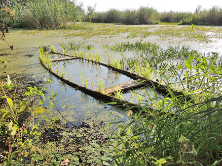 recess of pond with waterlogged wooden boat