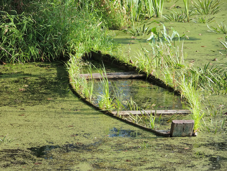 rushy: recess of river with waterlogged wooden boat Stock Photo
