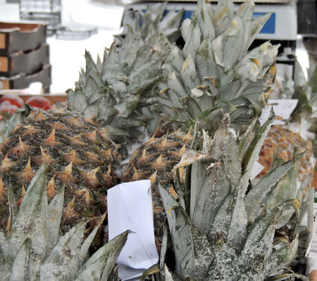 snowcovered: Street stand with snow-covered pineapples at a snowfall