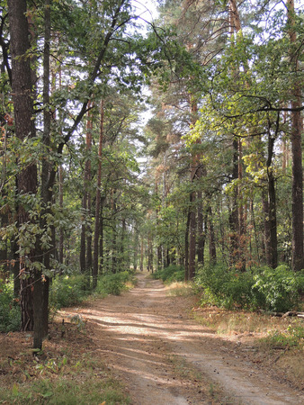 non urban: forest road at summer